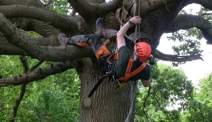 Reason Why You Need To Hire An Arborist