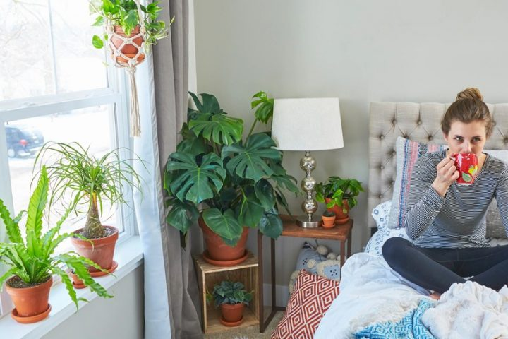 The perfect indoor plants to level up your hostel room