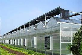 Diffused glass used in greenhouse result in higher fruit production